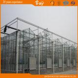 Type intensivement utilisé serre chaude de Venlo d'envergure de longue vie en verre