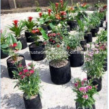 Le jardin plantant la pépinière élèvent le sac
