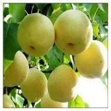 Peras enlatadas alta qualidade no alimento saudável do xarope