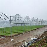 Парник специальной высокой Multi пяди Dricetly фабрики Китая Multi для горячей зоны с самым дешевым