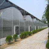 식물성 성장하고 있는을%s 호의를 베푸는 가격 Multispan 플라스틱 필름 온실
