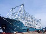 Anziehungskraft der Marinefisch-1000W, die helles MetallHalide elektronisches Vorschaltgerät anlockt