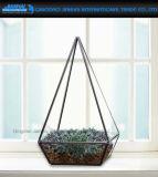 Contenitore succulente da tavolo di Terrarium della pianta del contenitore geometrico di vetro di Terrarium