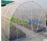 중국 제조자 반대로 곤충 그물 (HT5101)