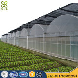 좋은 품질 토마토 설치를 위한 Tempered PVC/PE 필름 온실