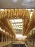 Echter australischer gesalzener Schaffell-Sprunglambskin-geschorene Schaffelle