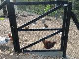 Reticolato esagonale della rete metallica dell'uccelliera dell'uccello del pollo