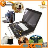 Macchina portatile di ultrasuono per il bestiame delle capre (Sun-800C)