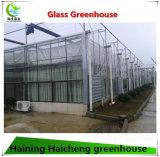 Moderner Entwurfs-Glasgewächshaus für Sammeln