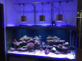 가득 차있는 스펙트럼 LED 원격 제어 산호초 수족관 빛