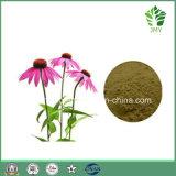 Горячая выдержка Purpurea Echinacea кислоты 1%~4% Cichoric надувательства