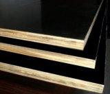 A película enfrentou a madeira compensada de Combi do Poplar/vidoeiro para o edifício