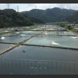 別のPower FishおよびShrimp Pond Aerator Farm Machine