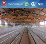 Matériel d'aviculture de cage de batterie d'oeufs du poulet A3l120