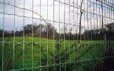 振られたヨーロッパの網の塀