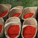 Baya Himalayan de Goji de la comida sana del níspero