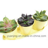 Planta y flor artificiales Sinocrassula Indica