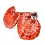 Het Uittreksel van de Paddestoel van China Reishi van het Polysaccharide van 10%