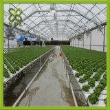 Estufa nova da folha do policarbonato do estilo de 2017 Europa com irrigação de gotejamento