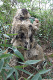 装置の軍隊の砂漠のCamo新しい軍Ghillieのスーツ