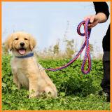 Collar를 가진 큰 Dog Durable Nylon Slip Leash