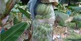 Polipropileno Nao Tecido De Banana Bags
