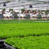 Invernadero caliente del jardín vegetal de las ventas con precio de fábrica