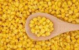 milho doce dourado enlatado 2840g da semente