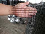fábrica soldada alta calidad soldada brillante galvanizada eléctrica del acoplamiento de alambre del acoplamiento de alambre 12bwg