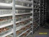 Замораживатель проекта холодной комнаты мясо 100 тонн (LAIAO)