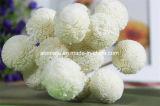 Flor de madera hecha a mano de Sola del crisantemo blanco (SF046)
