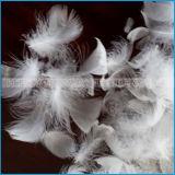 Gewaschene weiße Ente oder Gans versehen unten Preis mit Federn