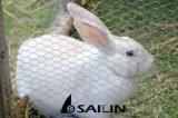 Sailin гальванизировало шестиугольную загородку кролика плетения провода