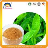 Estratto verde della foglia di tè con il polifenolo del tè
