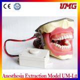 中国の歯科製品の麻酔の抽出モデルUmL2