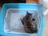 Zand van de Kat van de Draagstoel van de Kat van het Gel van het Kiezelzuur van het Zand van het Huisdier van Huminrich het Bal Gevormde