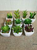 Plantes et fleurs artificielles de la centrale succulente Gu60747178