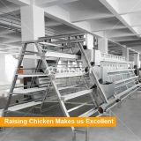 Qingdao ein Typ galvanisierter automatischer Geflügel-Schicht-Rahmen für Verkauf