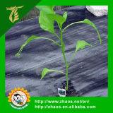 Weed-Schutzvorrichtung-große Plastikmatten-Anti-UVgras-Bedeckung