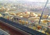 Der Hünchen-Bauernhof sperrt das Gerät ein, das heiß ist,/eingetaucht galvanisiert Kälten (ein Typ Rahmen)