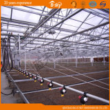 Type élevé Chambre verte de Venlo de feuille de polycarbonate de production