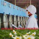 Белизна изготовления фабрики крахмала картошки еды