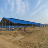Granja de cerdo prefabricada de la estructura de acero del bajo costo