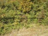 육군 Non-Allergenic 썩음 또는 형 저항하는 삼림 지대 Ghillie 한 벌