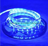striscia di bianco LED di 60SMD3528 4.8W/M