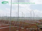 Solo Span Plastic Greenhouse para Sale