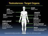 Testoterone grezzo Cypionate della polvere dello steroide anabolico di Buidling del muscolo
