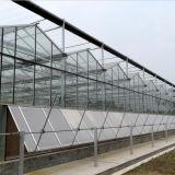 야채를 위한 다중 경간 긴 일생 유리제 온실