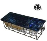 Gekko die Jet Acrylic Swimming SPA Pool surfen