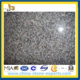 Neu-Kaledonien Brown Granite für Kitchen Top, Slab (YYAZ)